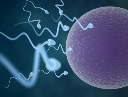 penetracion: Las células de esperma Foto de archivo