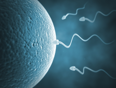 Sperm cells and human egg cell Stock Photo - 19958632