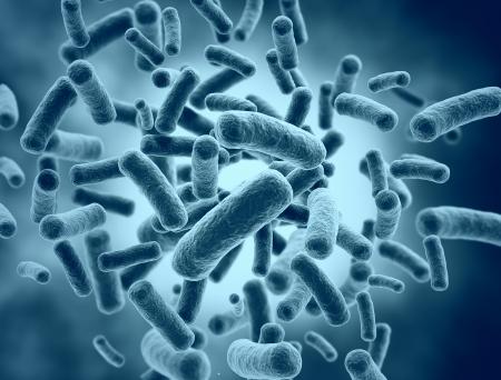 Las células bacterianas - ilustración médica