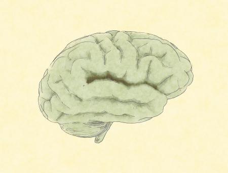 Human brain painting  photo