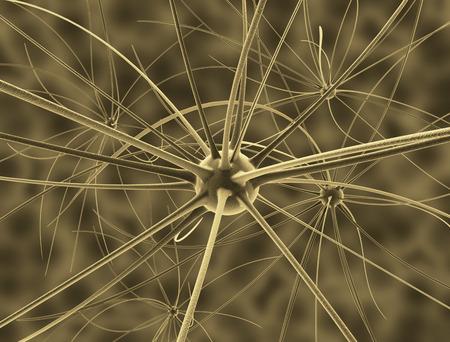 encephalon: Brain cells