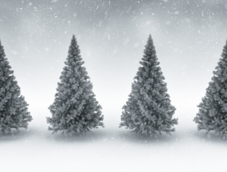Pine trees and snow - Christmas background  photo