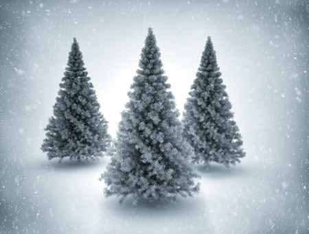 Pine trees and snow  photo