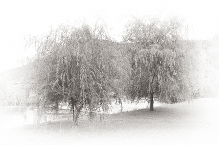 wilds: Two  trees, white background