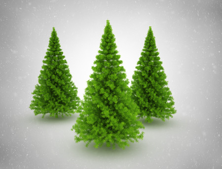 Christmas trees  photo