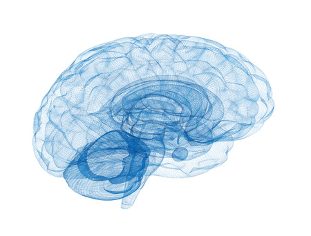 Brain wireframe model blue isolated on white background Фото со стока
