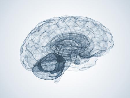 人間の脳のワイヤ フレーム モデル