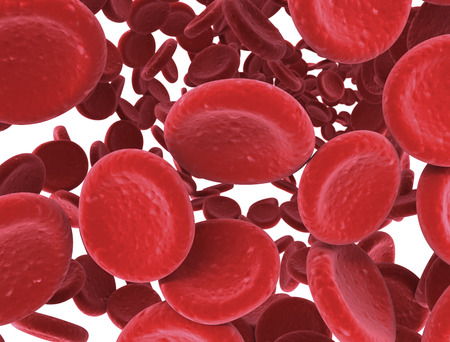 white blood cell: Red blood cells close up slight depth of field