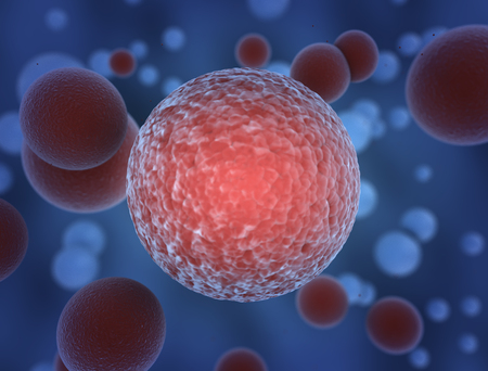 globulos blancos: Imagen de alta resoluci�n de los gl�bulos rojos Foto de archivo