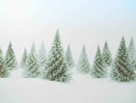 white winter: Winter scene with green pine trees and snow