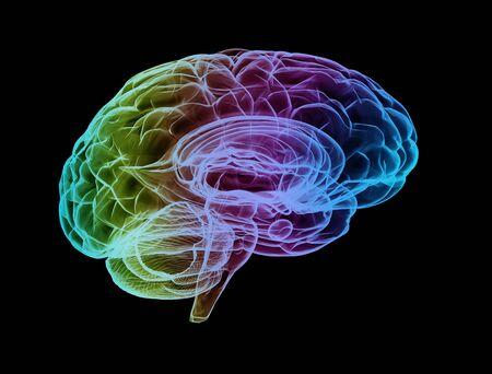 Human brain multi color Stock Photo