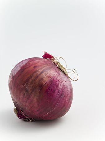 potherb: Onion on white