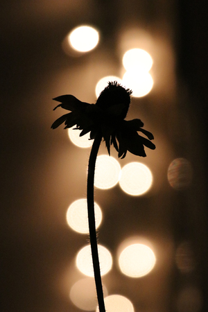 A backlit and silhouetted flower at night.