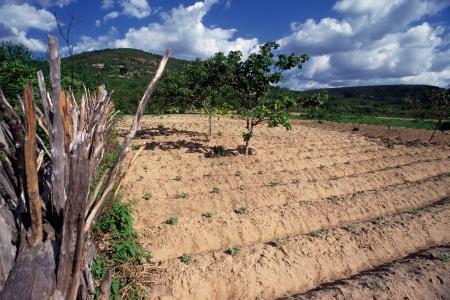 backwoods: Planting in backcountry, Domingos Mourão Piauí Brazil