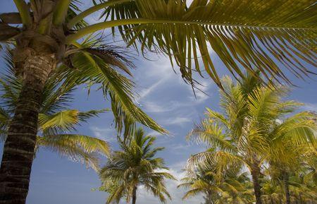 palm tree Stock Photo - 5198631