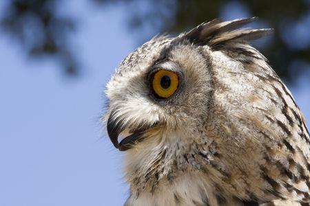 owl Stock Photo - 6560047