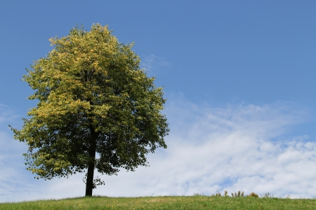 clouded: Lonely tree standing on top of grassy hill against blue sky and white clouds coming up at the horizon
