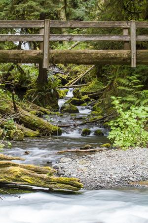 Vertical Photo of Nature Bridge over stream near Marymere Falls 스톡 콘텐츠