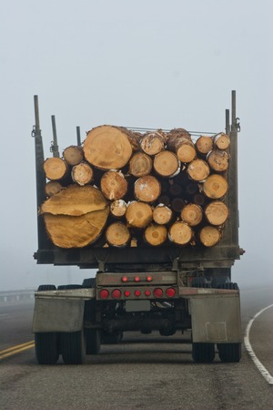 Vertical photo of the back end of a logging truck driving down a foggy highway