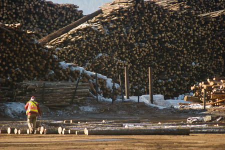 lumber mill: Photo of a man marking logs at the lumber mill