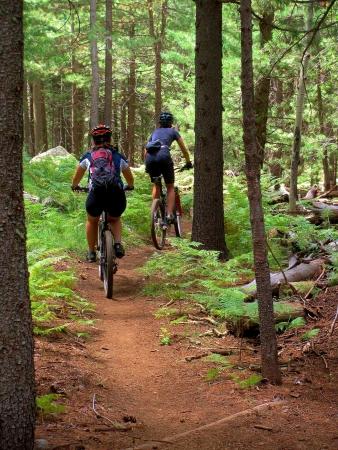 sentier: Deux motards de la randonn�e en montagne d'une colline dans la for�t