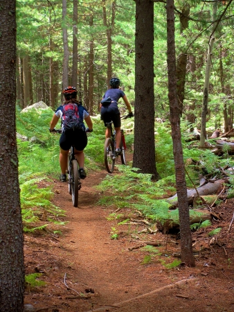 mountain bike: Two mountain bikers hiking a hill in the forest Stock Photo