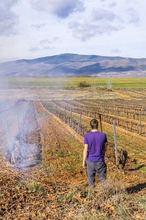 pruning and burning of vine shoots in winter in spain