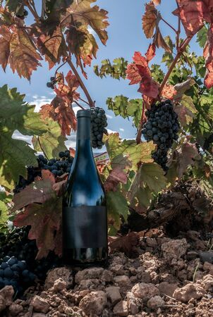 bottle of wine with grapevines in autumn Stock fotó