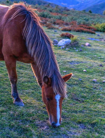 horse in the mountain at sunset eating 免版税图像