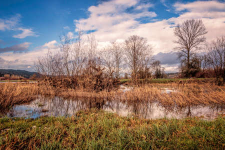 Wetland pond with marsh grasses and blue-sky background Stock Photo
