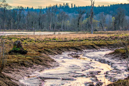 Expansive open mudflats on Billy Frank Jr Nisqualli National Wildlife Area.