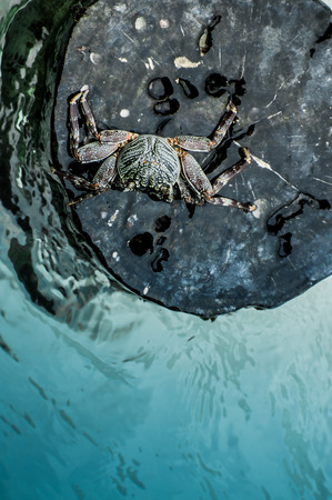 decapod: A crab on a planted wooden log in the ocean surounded by water viewed from the top.