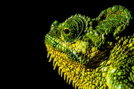 stereoscopic: A close up view of a chamelion at night.