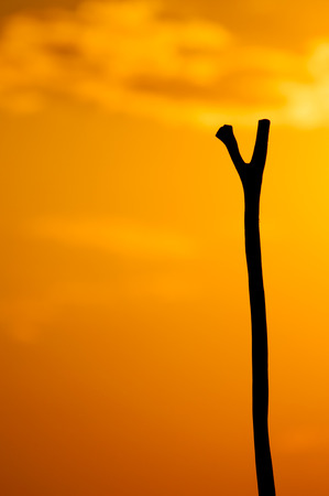 rudimentary: The top part of the wooden stick, or pole silhouette against the red orange sunset of the late afternoon. Stock Photo