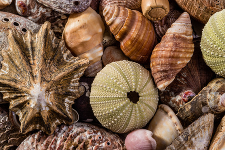 kinds: Different kinds of seashells all mixed together.
