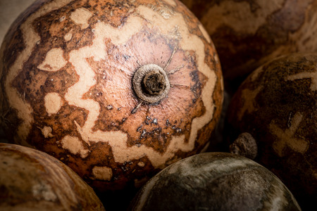 browns: A close up view of some decorated dry calabas in dark browns and light yellowish colours Stock Photo