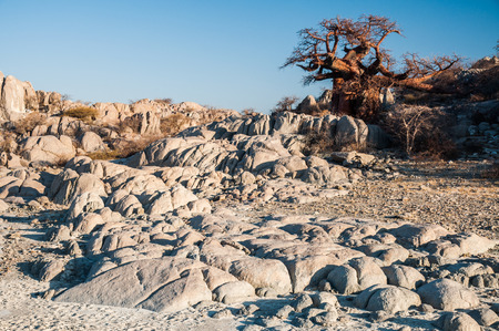 extrusion: A baobab tree stands on the granite rock extrusion known as Kubu Island in the middle of the Makgadikgadi Salt Pan in Botswana.