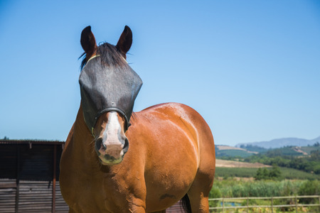 A horse on a farm stand in front of a farming landscape with a dark fly screen on the face as it looks towards the viewer.