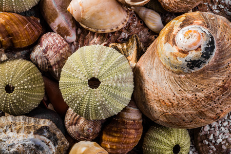 specialised: A mix of different kinds of sea shells mostly green and brown viewed up close.