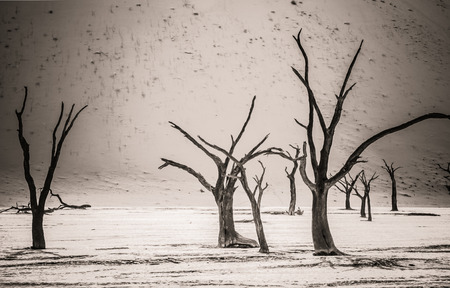 inhospitable: Dead Camelthorn trees stand, without decaying in Deadvlei in the Namib Desert.