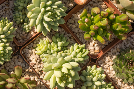 specialised: Different succulent plants placed on display next to each other as seen from almost directly above.