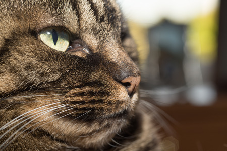 whiskers: Sideview Portrait of a cat lying and resting comfortably at her home. Only one eye and whiskers on the right of the face is visible.