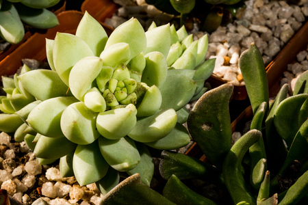 specialised: A succulent plant is viewed from above as it is illuminated by some sunlight from one side.