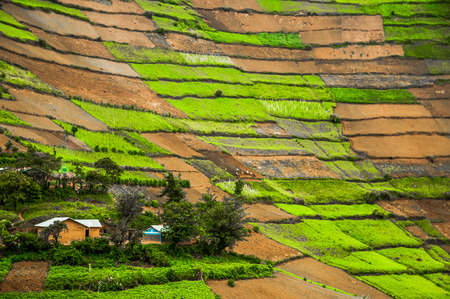 homesteads: The typpical landscape of the Kabale District in Southern Uganda with homesteads within worked plots of land against the fertile hills from below to right at the top of the hills.
