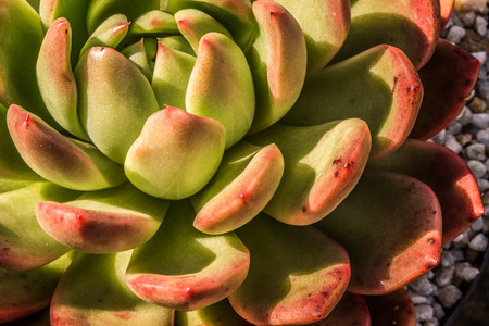 adjusted: An up close view of a small succulent plant.
