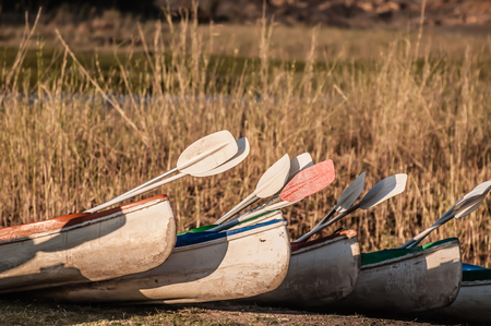bank activities: Several fibre glass kayaks lie on the bank of the river in front of long grass, ready to be used.