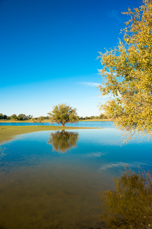 Two trees stand by a watery lanscape, one nearby, and the other far away on the horizon, casting their reflection in the water. Stock Photo