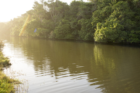 A view of a calm river flowing along a bank of tropical forests as the sun light floods in from the far end of the river.