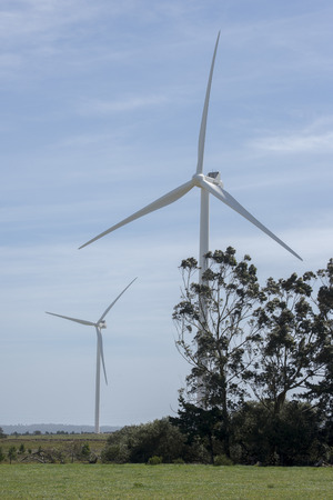Two wind turbines tower high above some trees in a field with green grass Standard-Bild