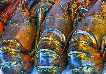 An up-close view of three fresh lobsters Foto de archivo